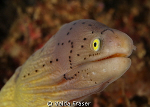 Geometric moray. by Valda Fraser